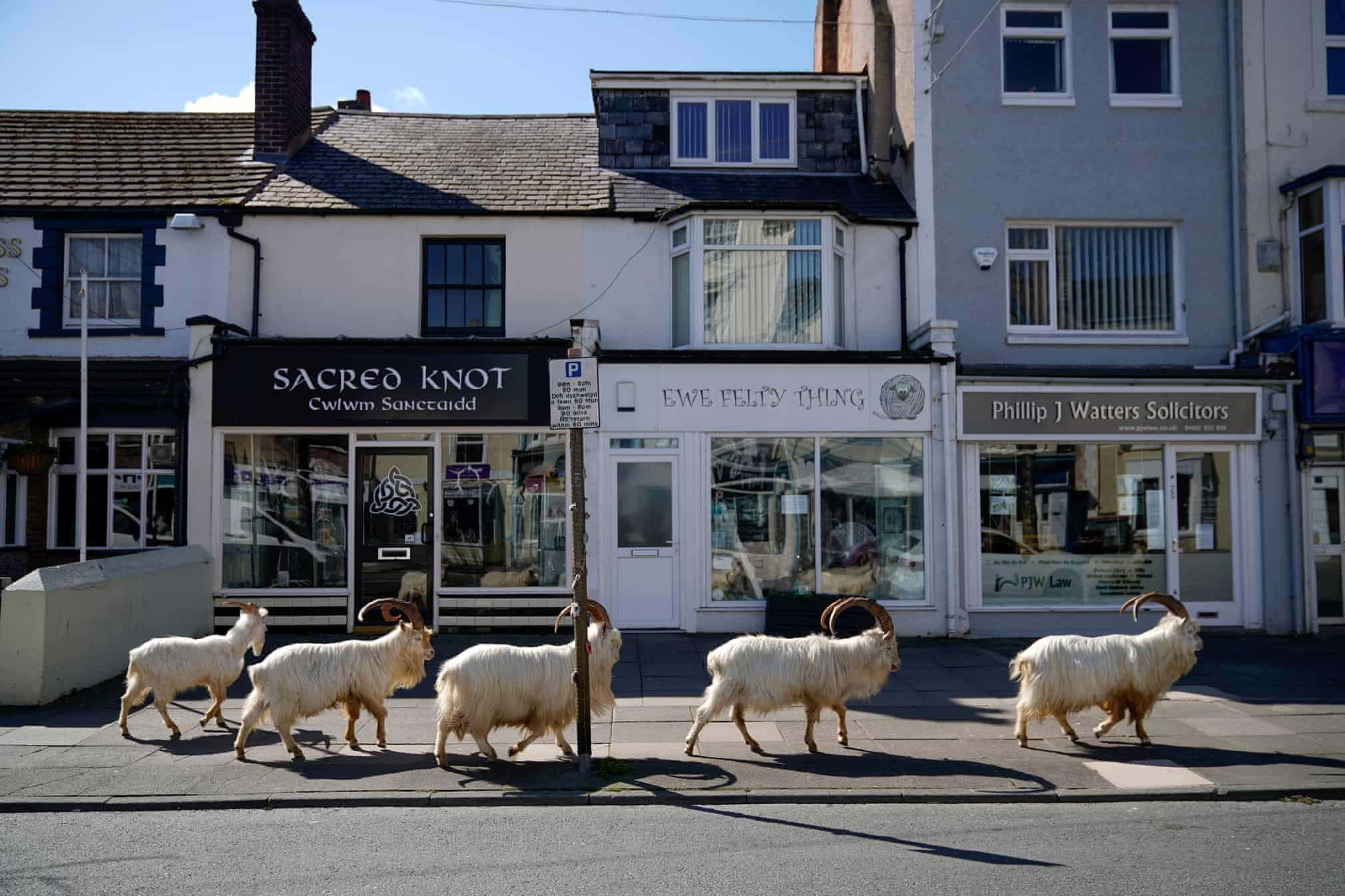 https://campaign-image.com/zohocampaigns/224260000002056004_zc_v39_goats_in_england.jpg