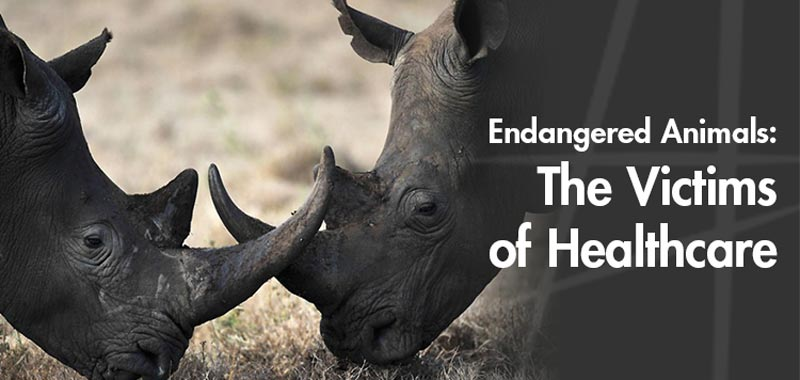 Endangered-Animals-The-Victims-of-Healthcare
