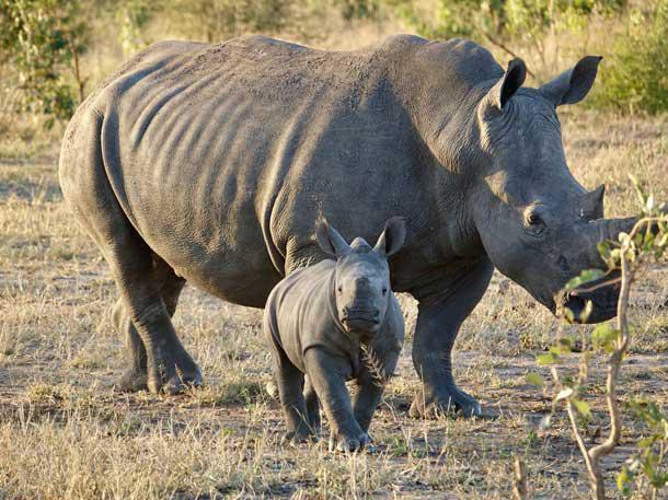 /campaigns/org696629516/sitesapi/files/images/696652941/rhinos1.jpg