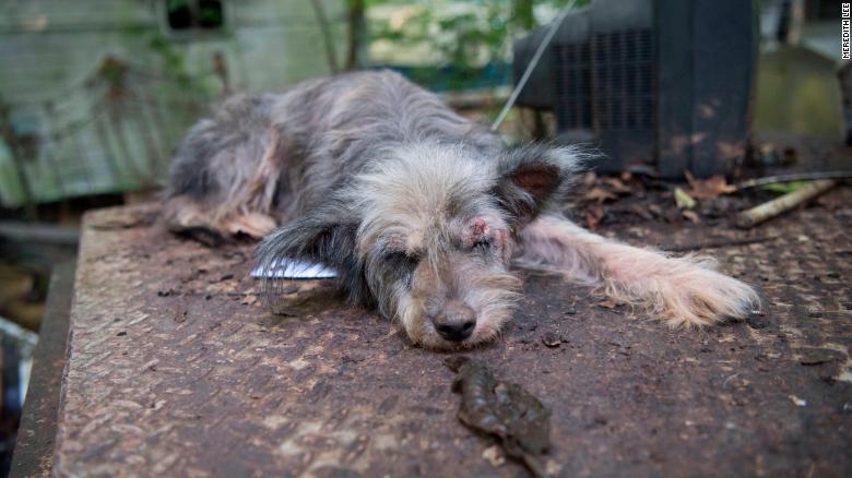 http://campaign-image.com/zohocampaigns/276712000005644004_zc_v64_animalcrueltybill.jpg