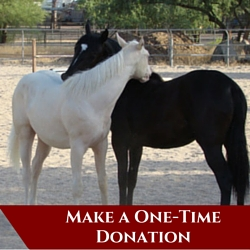 https://campaign-image.com/zohocampaigns/276712000008233004_make-a-one-time-donation.jpg