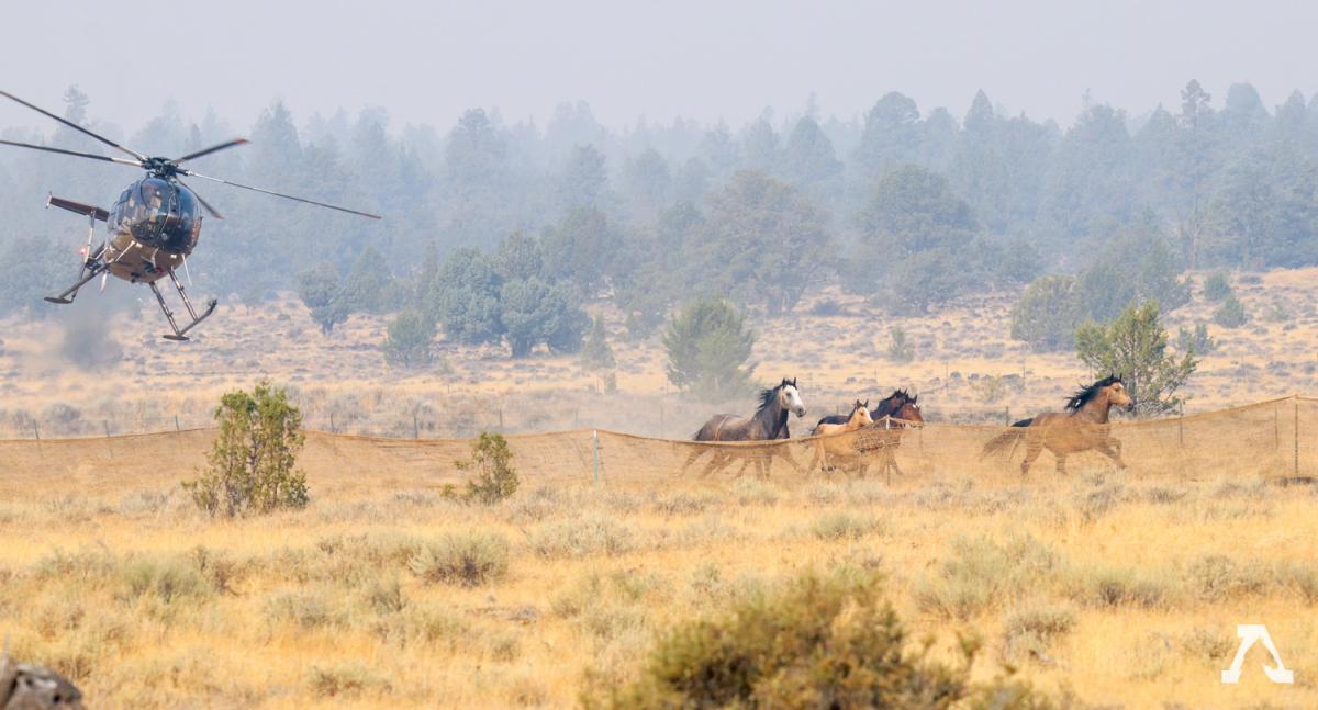 Devil's Garden Wild Horse Territory Round up