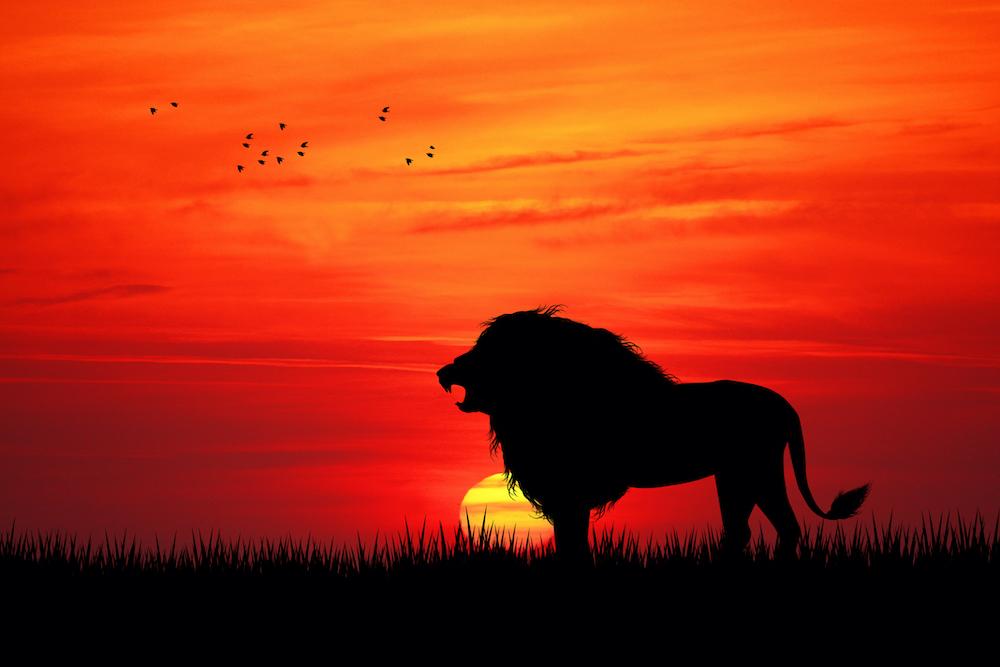 https://campaign-image.com/zohocampaigns/445319000007989006_zc_v10_bold_lion.jpg