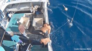 Fishing Vessel Monitoring