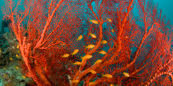 Corals are among the highly endangered organisms.