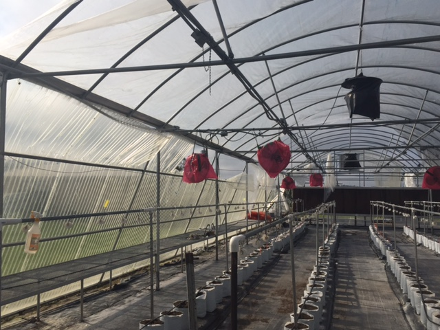 Jāderloon® Greenhouse withstood hurricane Irma