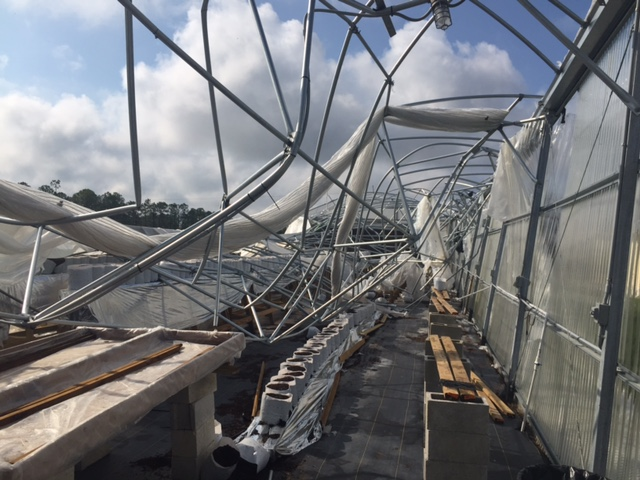 Competitive greenhouse destroyed during hurricane Irma